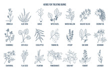 Collection Of Best Herbs For B...