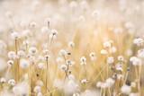 Fototapeta Kwiaty - Close up little white flower in nature
