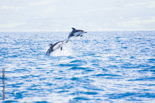 Foto op Plexiglas Dolfijnen Pacific White-sided Dolphins Jumping