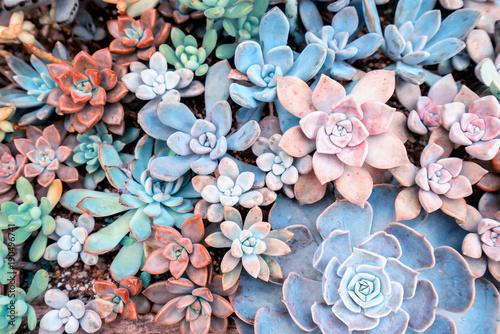 Foto op Canvas Bloemen Miniature succulent plants in garden