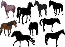 Nine Horses Isolated On White