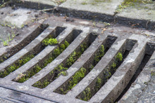 Manhole Drain Cover With Moss