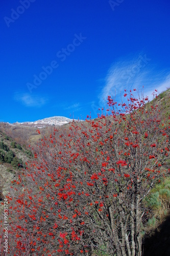Poster Donkerblauw Arbres en montagne dans les Pyrénées
