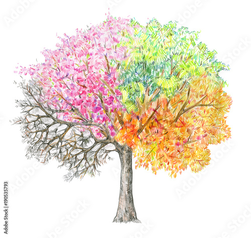 Four seasons.  Tree handdrawing isolated on white. Winter, spring, summer, autumn. Fototapete