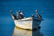 Pelican While Resting On A Boat At Sunset