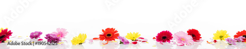 verschiedene Blütenköpfe auf weißem Hintergrund