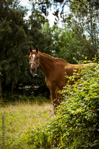 Foto op Canvas Paardrijden Thorough bred horse looking at camera