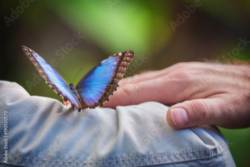 Fotografie, Obraz  Couple holding a tropical butterly (Blue Morpho).
