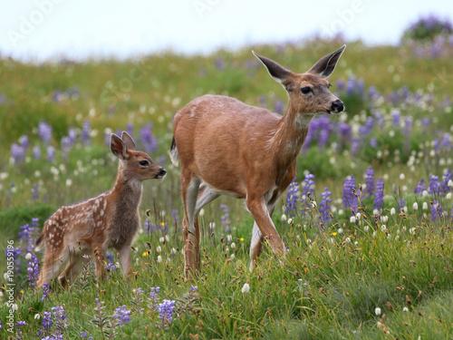 Mom and Baby Deer in Flowers