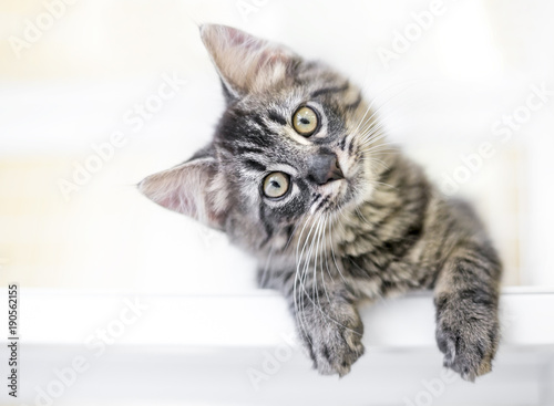 A young kitten gazing at the viewer curiously with a head tilt Tablou Canvas