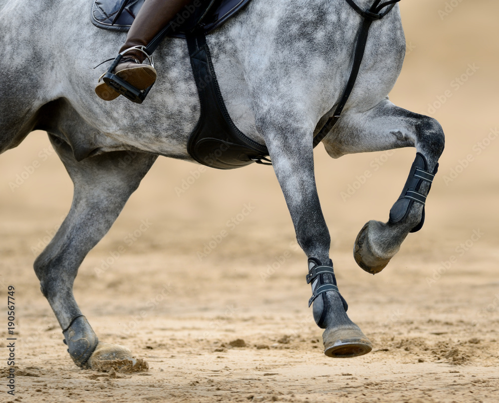 Fototapety, obrazy: Close up image of legs of horse on show jumping competition.