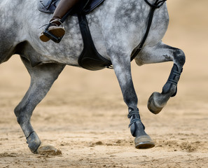 Close up image of legs of horse on show jumping competition.