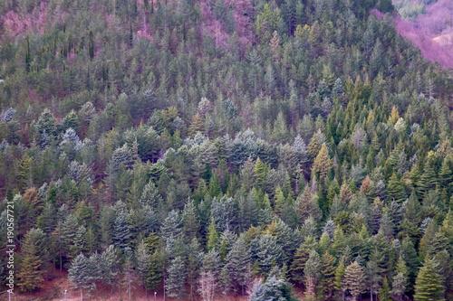 Fotografie, Obraz  foresta del casentino