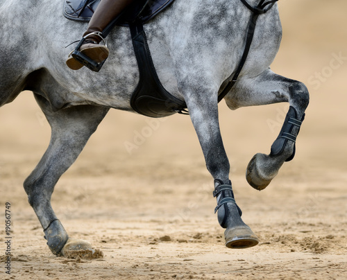 La pose en embrasure Equitation Close up image of legs of horse on show jumping competition.