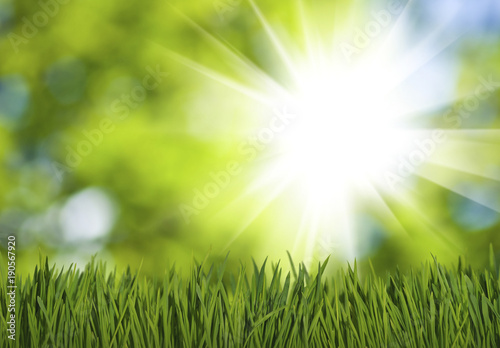Photo sur Toile Herbe grass in the park on green background closeup