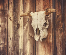 Wall With A Steer Or Cow Skull...