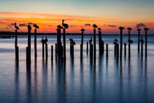 Pelican And Pier Piling Sunset Seascape Silhouettes