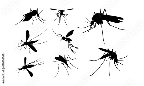Set of Mosquito Silhouette vector illustration, Close Up Mosquito Silhouette Fototapeta