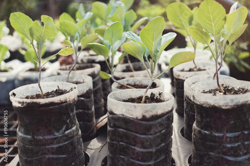 Fotografia, Obraz  growing vegetable in used plastic bottles, reuse recycle eco concept