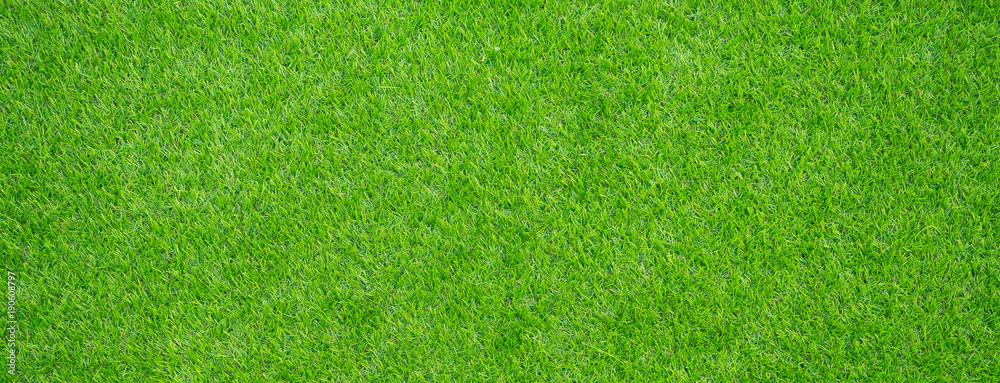 Fototapety, obrazy: grass field background. green grass. green background