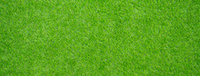 Grass Field Background. Green ...