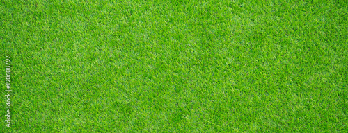 Tuinposter Gras grass field background. green grass. green background