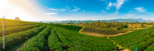 Cuadros en Lienzo Panoramic scenery of tea plantation at Chieng Rai Thailand