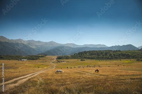 Spoed Foto op Canvas Natuur Horses in mountain under the blue sky