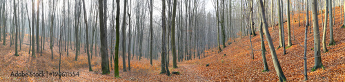 Foto op Canvas Herfst Small valley in autumn beech forest. Europe, Poland, Holy Cross Mountains.