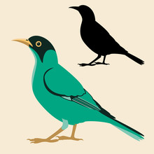 Honeycreeper Bird Vector Illustration Flat Style Black Silhouette