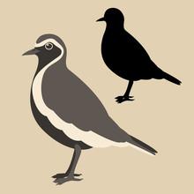 Plover Bird Vector Illustratio...