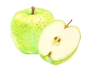 青りんご 水彩イラスト