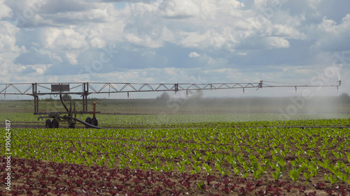 Cuadros en Lienzo  Aerial view: Crop Irrigation using the center pivot sprinkler system