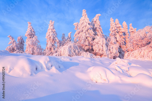 Deurstickers Lichtroze From the snow covered lawn there is a view to nice trees covered by frost and snow. Light pink sun rays of sunset enlighten sky and trees. Magic winter landscape.