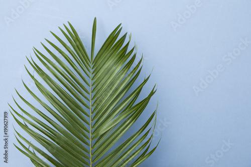 tropikalny-drzewko-palmowe-lisc-na-pastelowym-blekitnym-tle