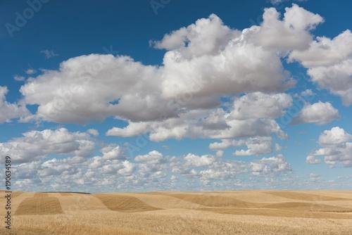 Cumulus cloud over wheat field