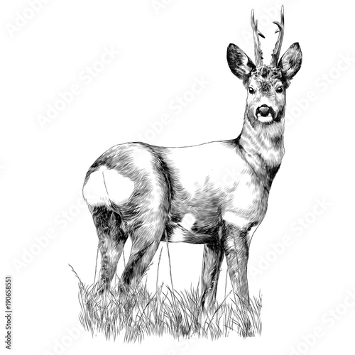 Fotografie, Obraz  deer stands in the dry grass sketch vector graphics monochrome drawing