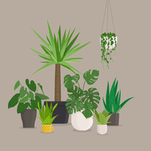 Set Of Green Indoor House Plants In Pots