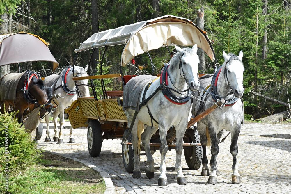Fototapety, obrazy: Konie, szlak turystyczny, Morskie Oko, Poland