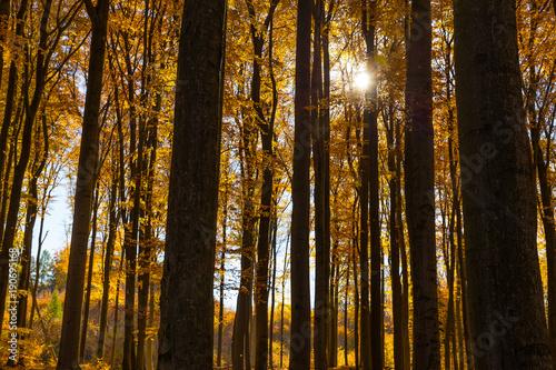 Foto op Plexiglas Landschappen Colorful Autumn In Voderady Beechwood, Czechia