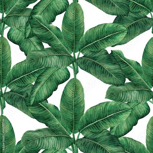 akwarela-obrazu-koks-banan-palmowy-lisc-zielonego-urlopu-bezszwowy-deseniowy-tlo-akwareli-reka-rysujacy-ilustracyjny-tropikalny