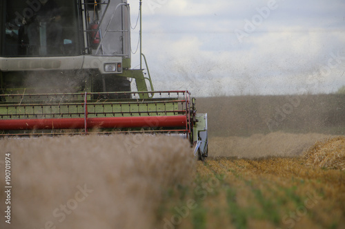 Fotografia  harvesting corn