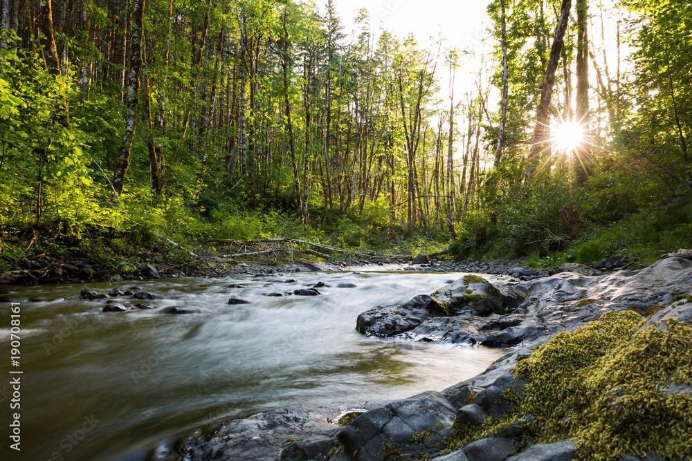 Fototapeta Gales Creek