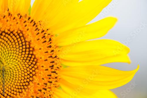 bliska-tekstury-slonecznika-organiczne-i-naturalne-tlo-kwiatowe