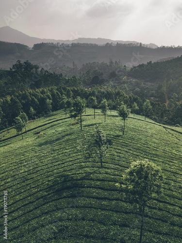 In de dag Khaki Teeplantagen Landschaft