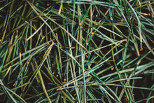 Bed Of Green Pine Needles Deca...