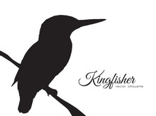 Silhouette Of Kingfisher Sitti...