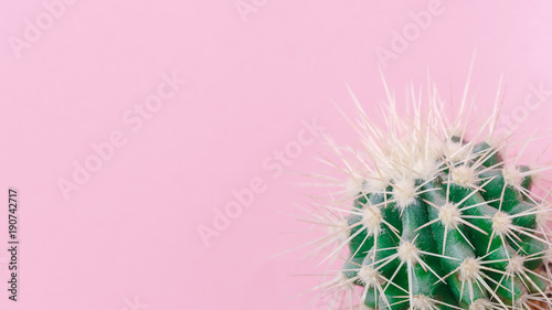 Foto op Canvas Cactus Cactus close up on the pink background