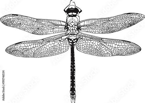 Dragonfly Graphic Realistic Line Ink Drawing Wallpaper Mural