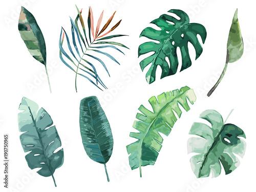 zestaw-lisci-troppical-ilustracji-wektorowych-pojedyncze-zdjecie